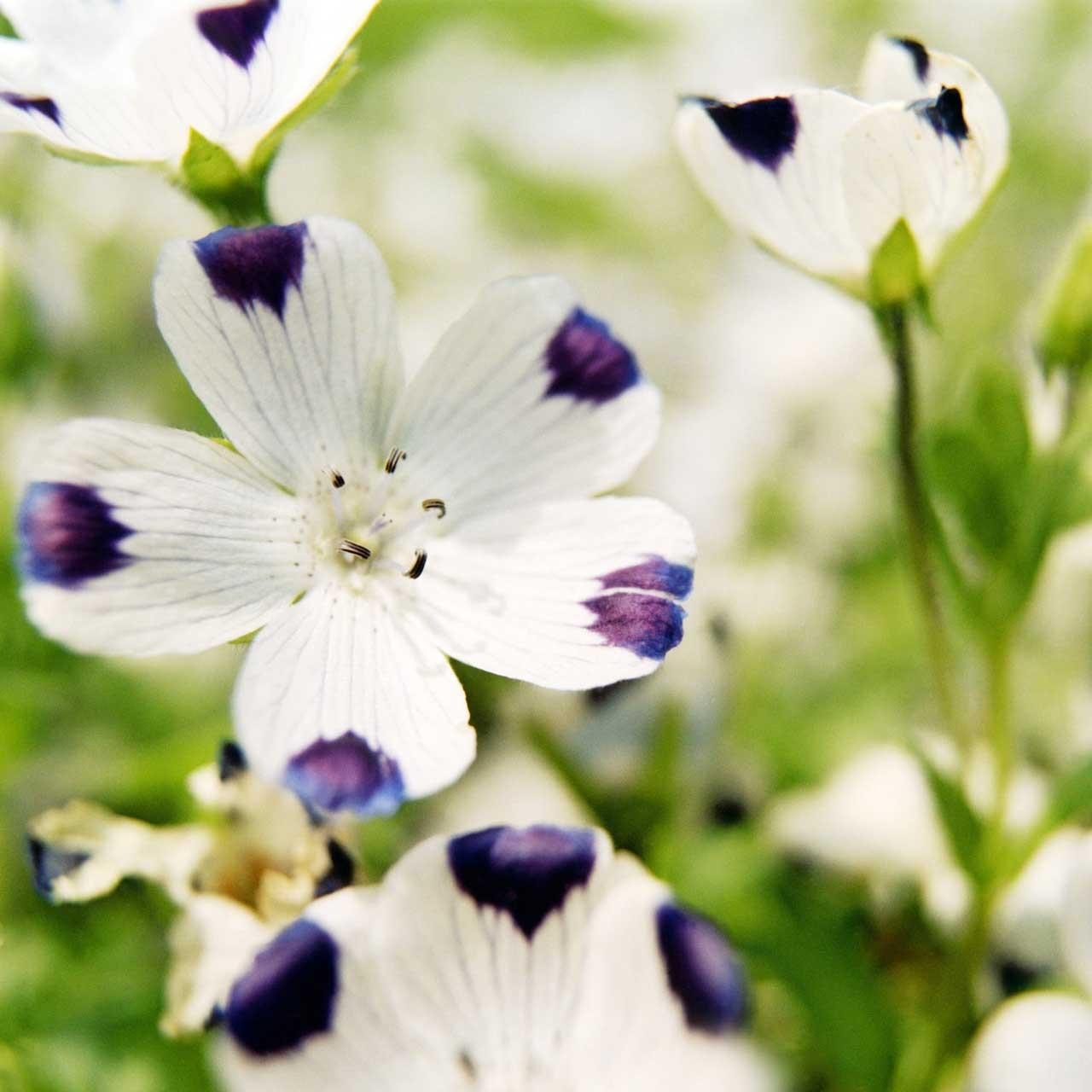 Laure-Maud_14_photographe_jardin-fleurs_02