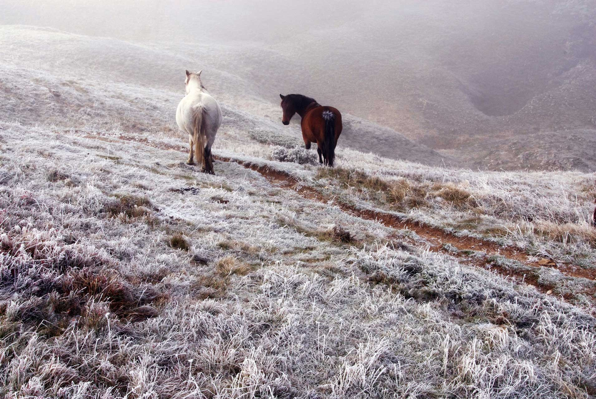 Laure-Maud_22_photographe_paysage_Vercors_Font-Urle_chevaux_01
