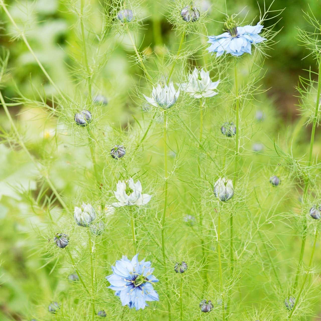 Michèle Cros cultive certaines plantes dans son jardin aux portes de son atelier, et pratique avec respect la cueillette de plantes sauvages dans des lieux préservés.