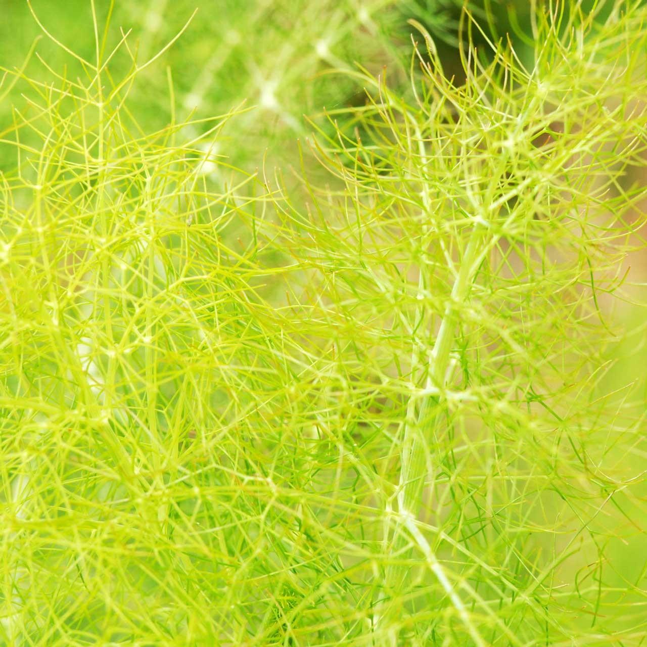 Laure-Maud_Douces-Angevines_12_cosmetiques-biologiques