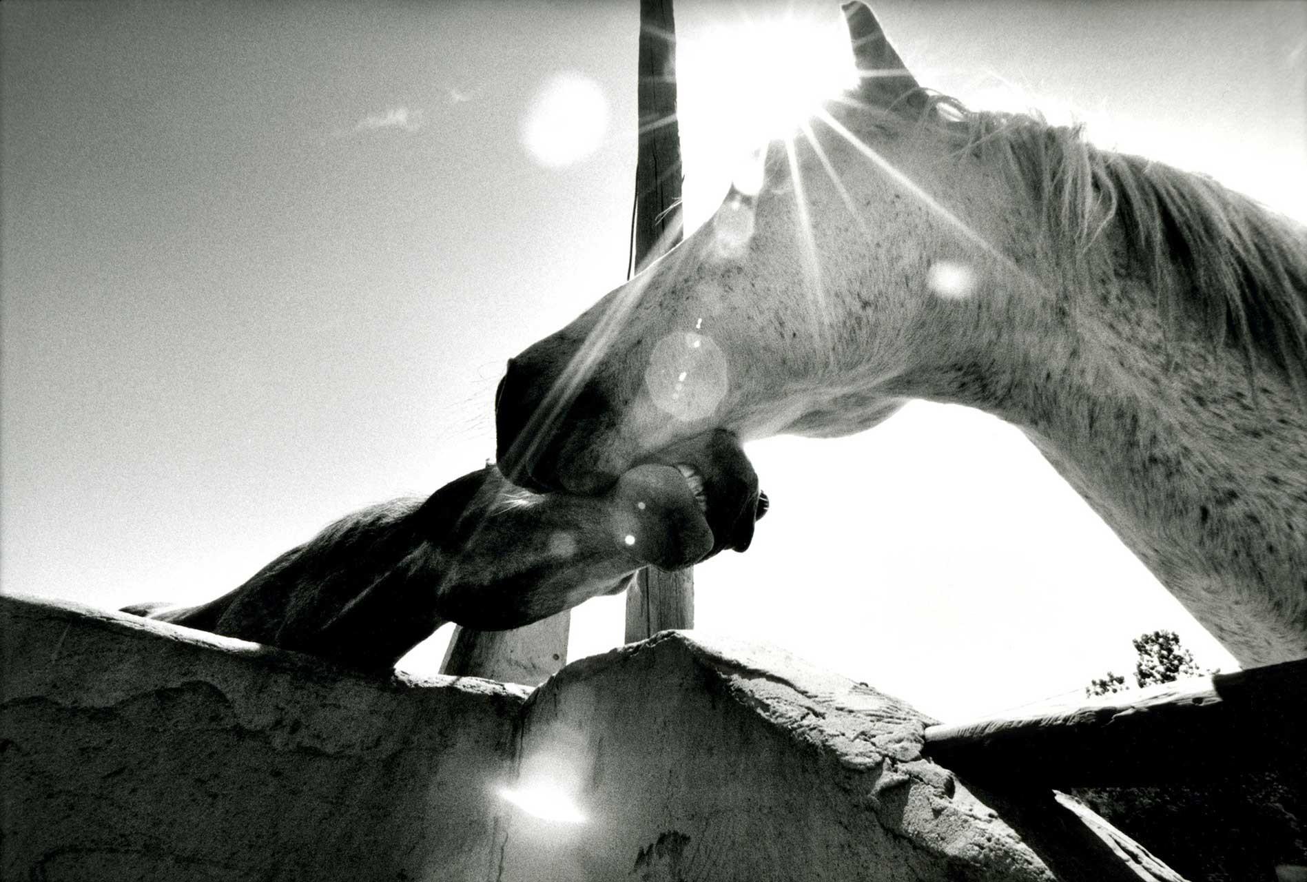 Laure-Maud_photographe_01_chevaux-camarguais_02
