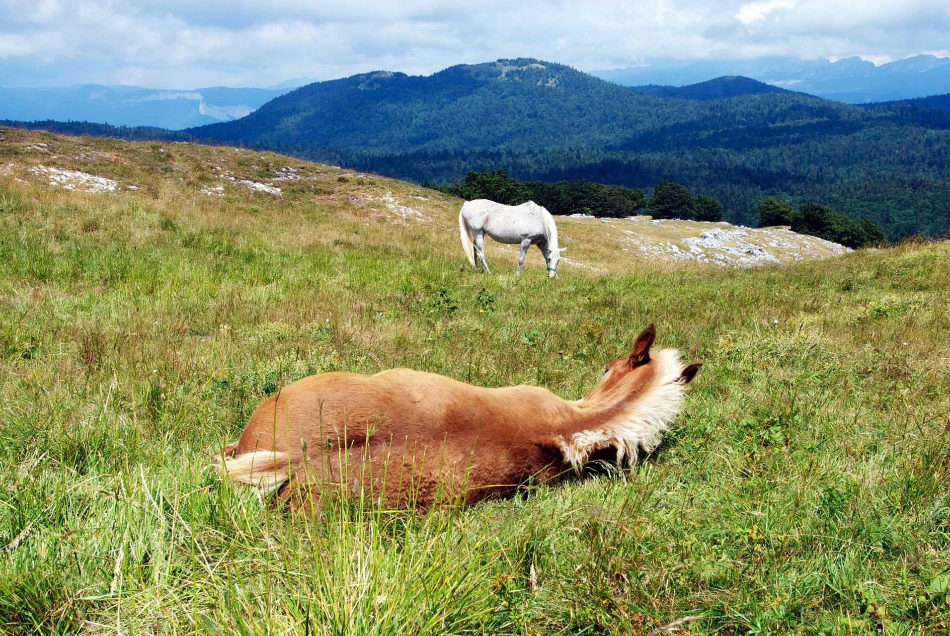 Laure-Maud_photographe_09_chevaux_Vercors_Font-Urle_03