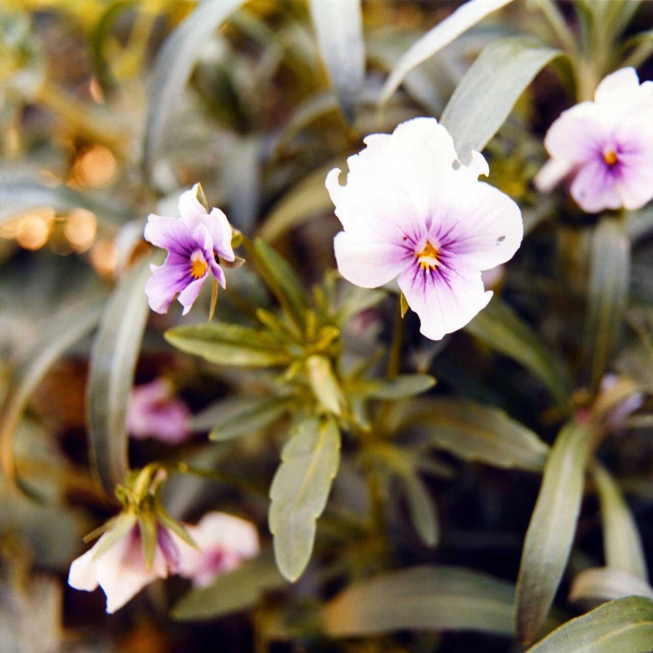 Laure-Maud_04_photographe_jardin-fleurs_01