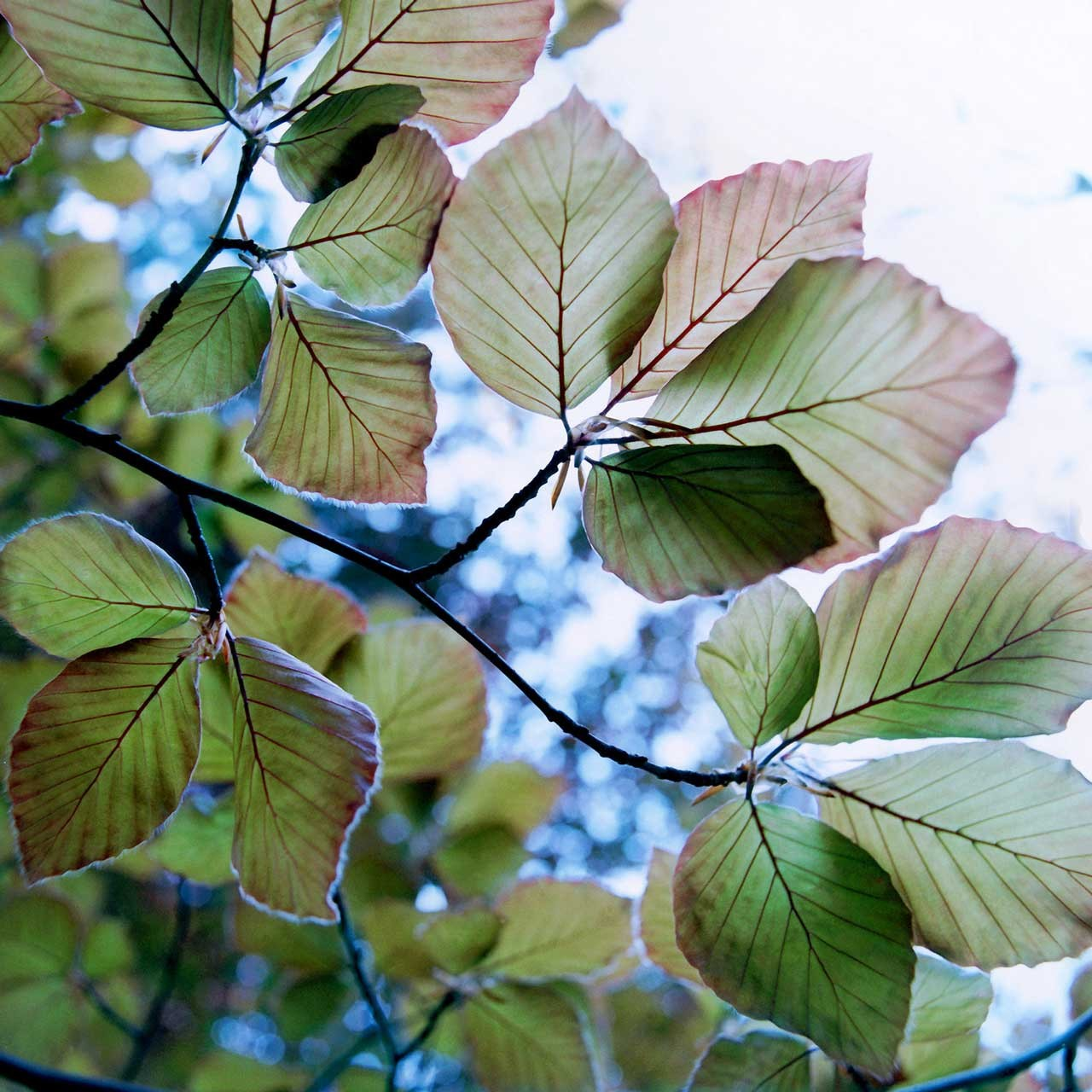 Laure-Maud_07_photographe_jardin-arbre_2