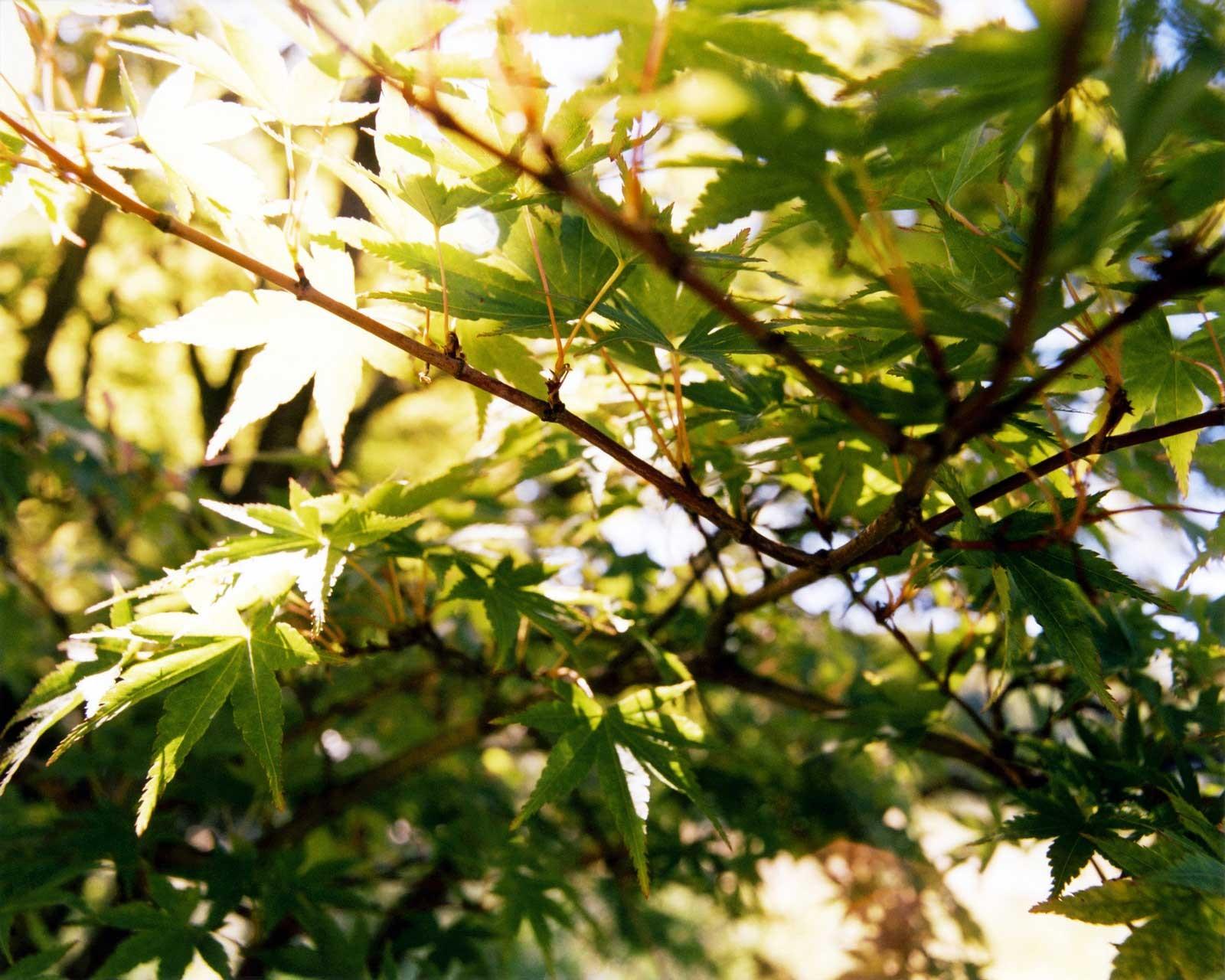 Laure-Maud_08_photographe_jardin-arbre_1