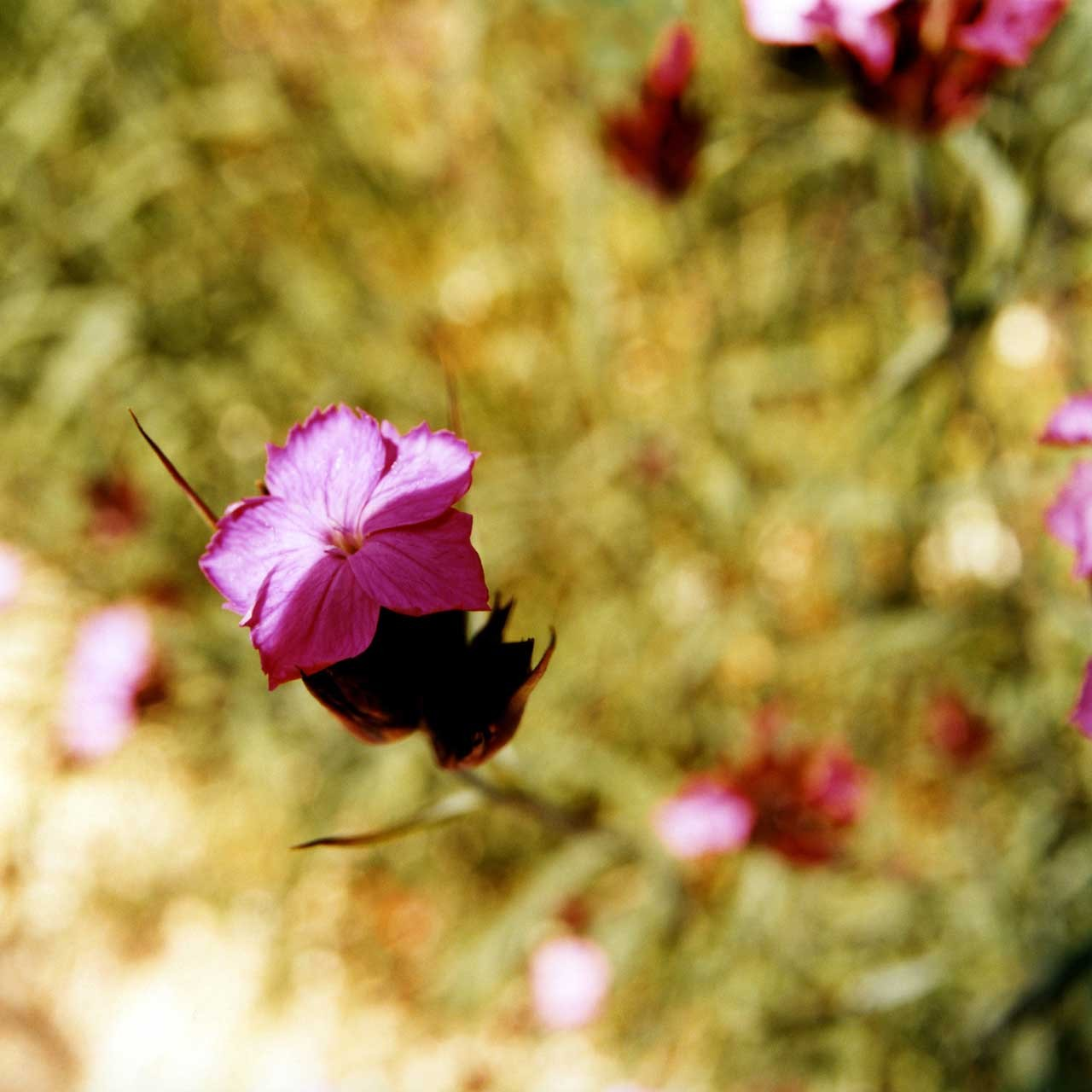 Laure-Maud_10_photographe_jardin-fleur_02