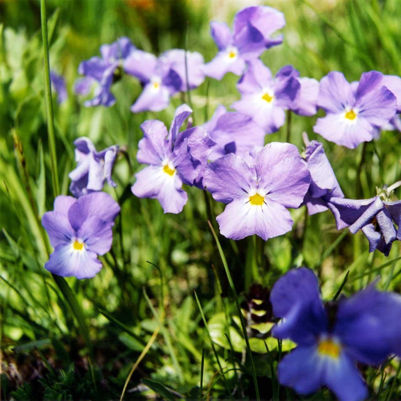Laure-Maud_11_photographe_jardin-fleurs-montagne_01