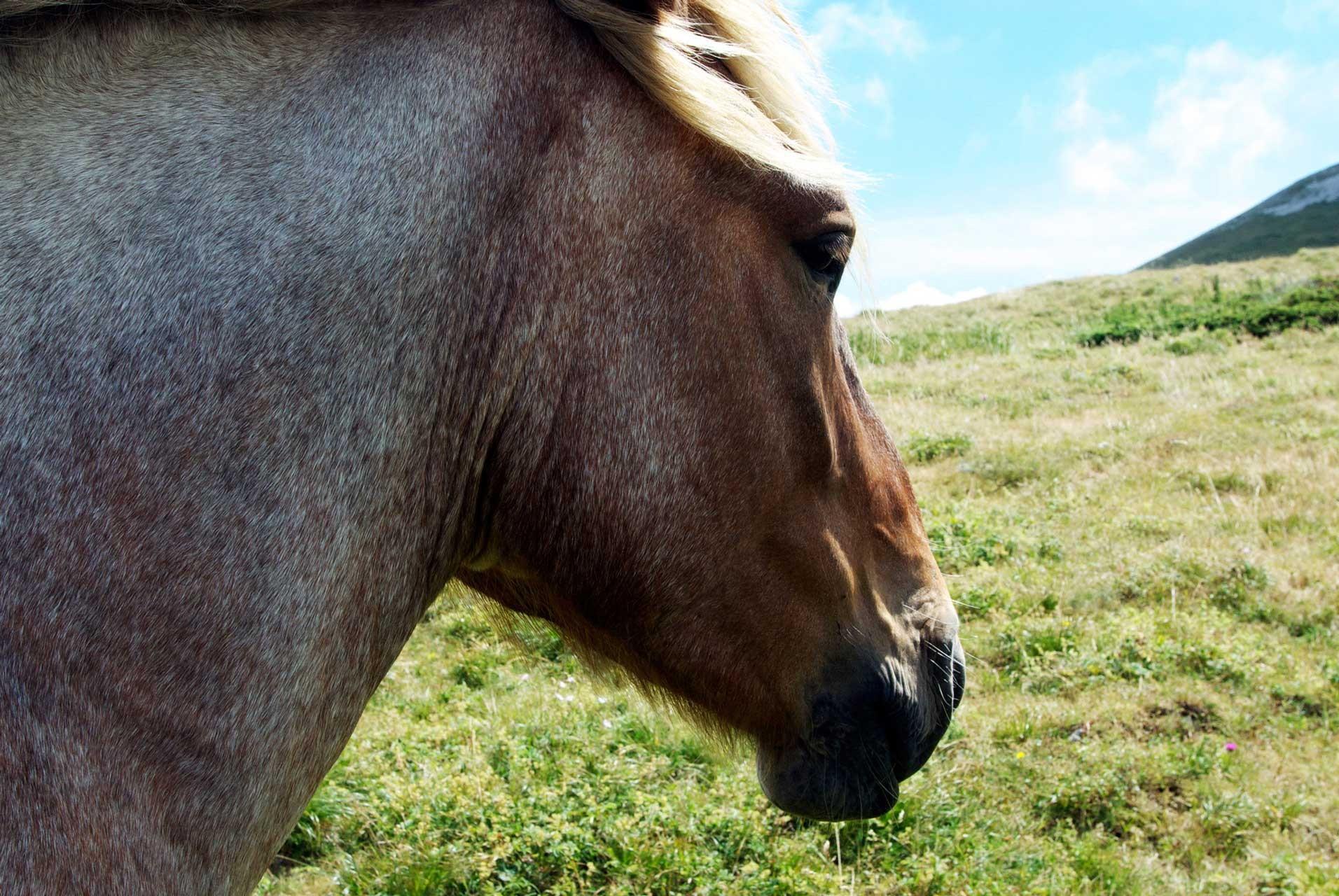 Laure-Maud_13_photographe_paysage_Vercors_Font-Urle_chevaux_03