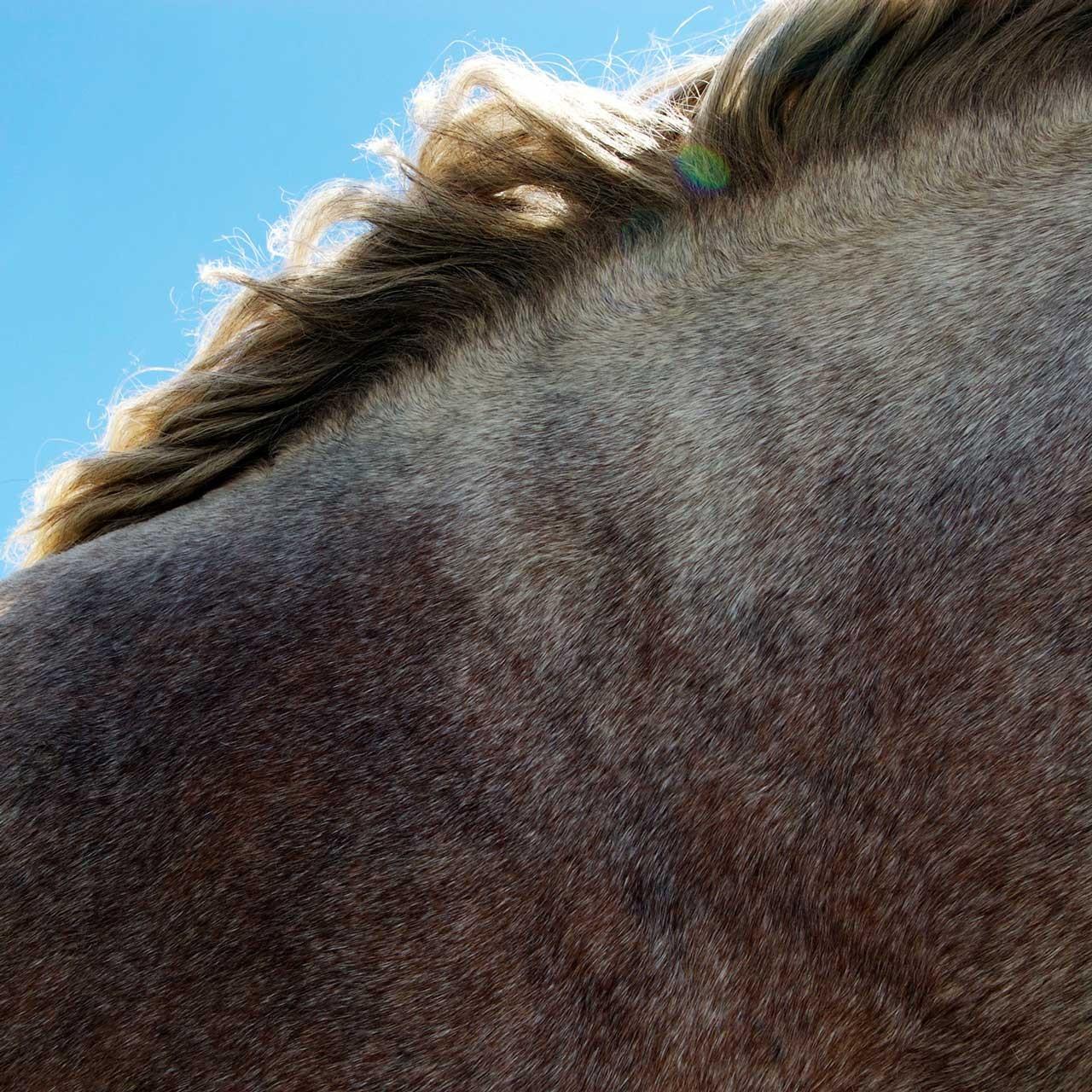 Laure-Maud_photographe_02_chevaux_Vercors_Font-Urle_01