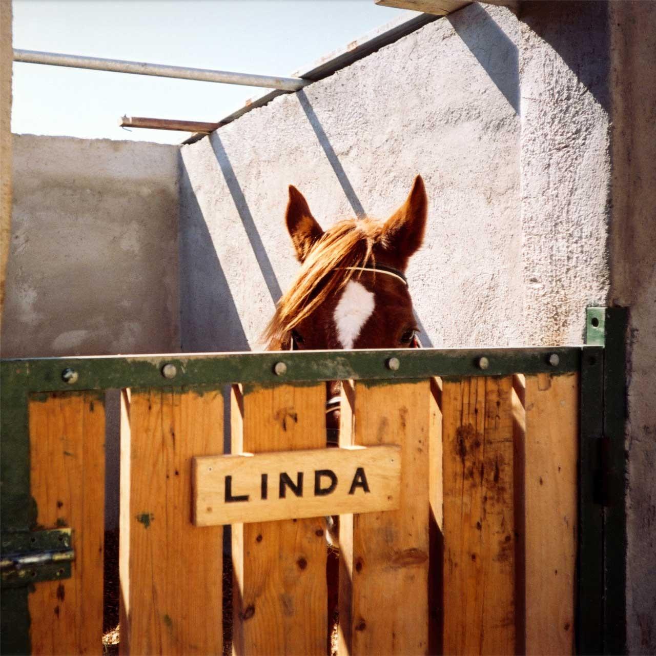 Laure-Maud_photographe_06_cheval_Linda