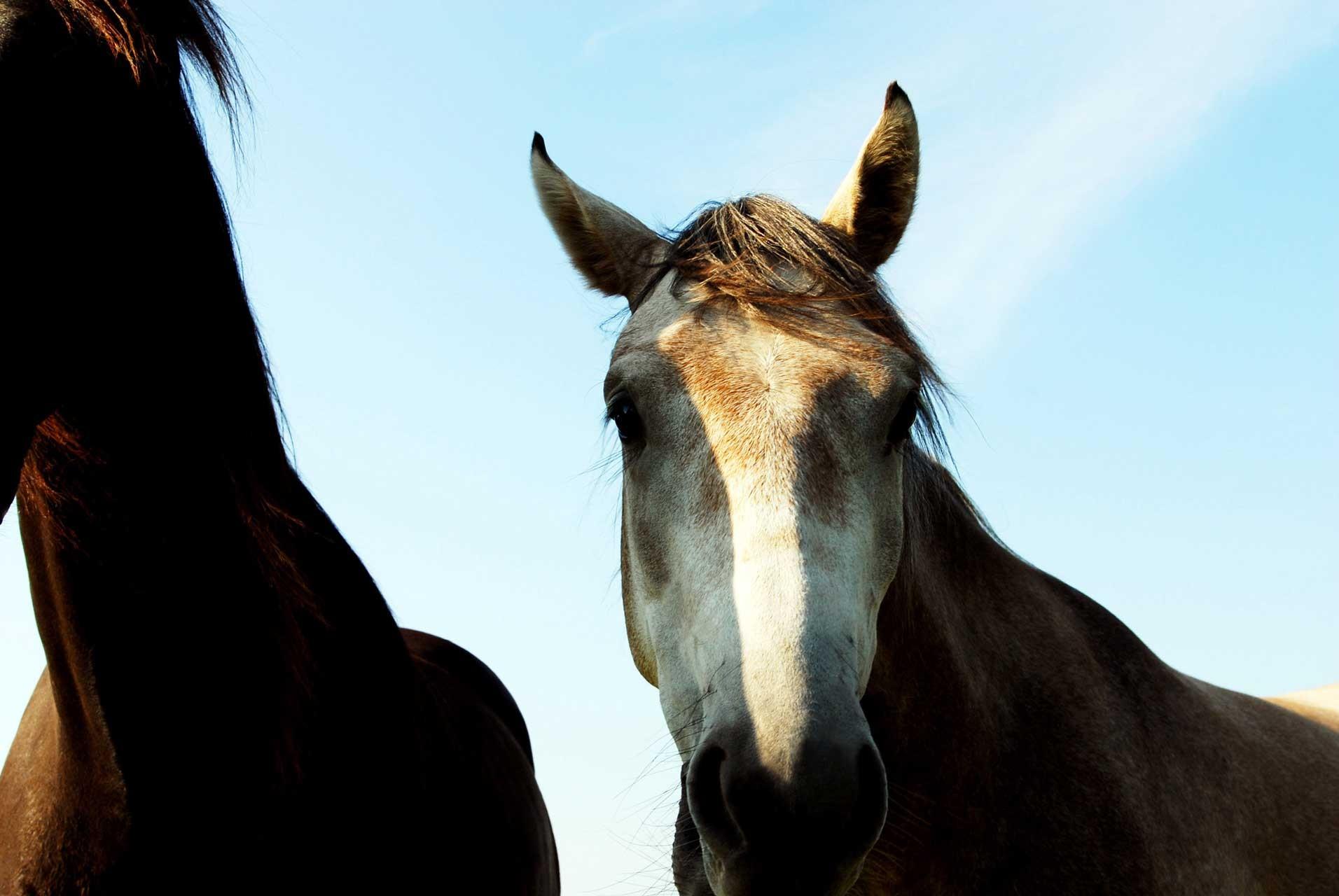 Laure-Maud_photographe_07_chevaux-01