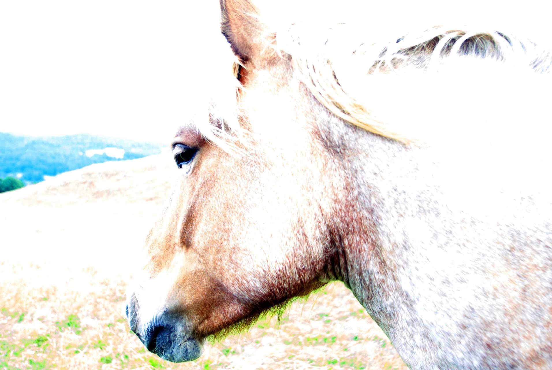 Laure-Maud_photographe_10_chevaux_Vercors_Font-Urle_02