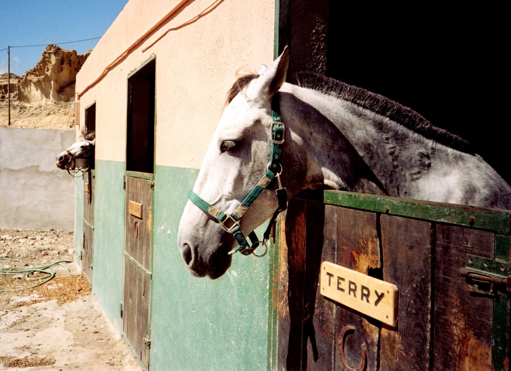 Laure-Maud_photographe_12_chevaux_Terry-Canario3