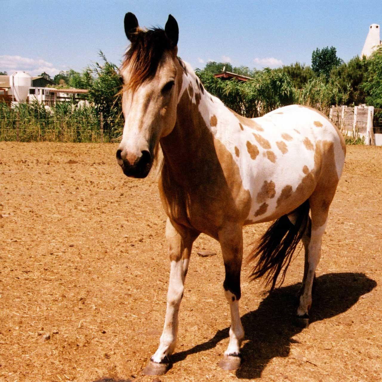 Laure-Maud_photographe_14_chevaux-camarguais_03